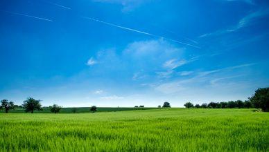 Pelatihan Environmental Land Landscape