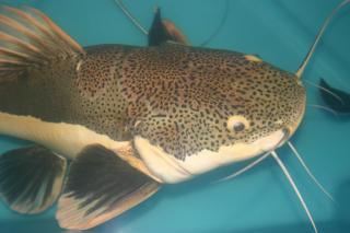 Training Budidaya Ikan Lele