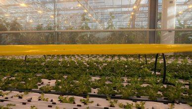 Training Budidaya Sayuran dengan Teknologi Hidroponik NFT