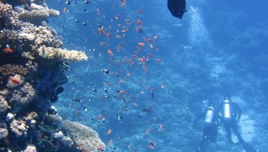 Training Pakan Ikan Terapung dan Tenggelam